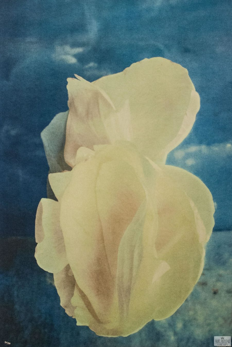 Photo fusion lithography Gordon Parks color photography flowers