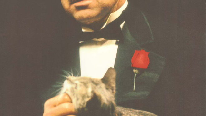 The Godfather I (The Godfather's Cat)